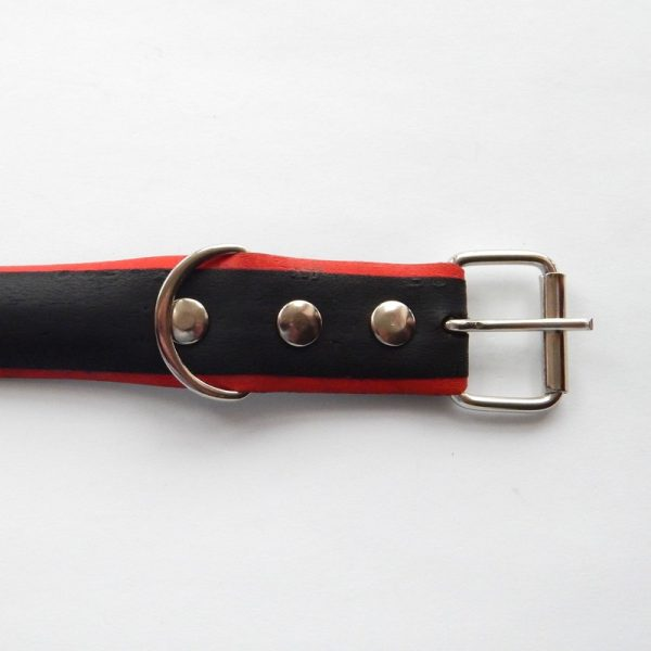 bicycle tyre dog collar